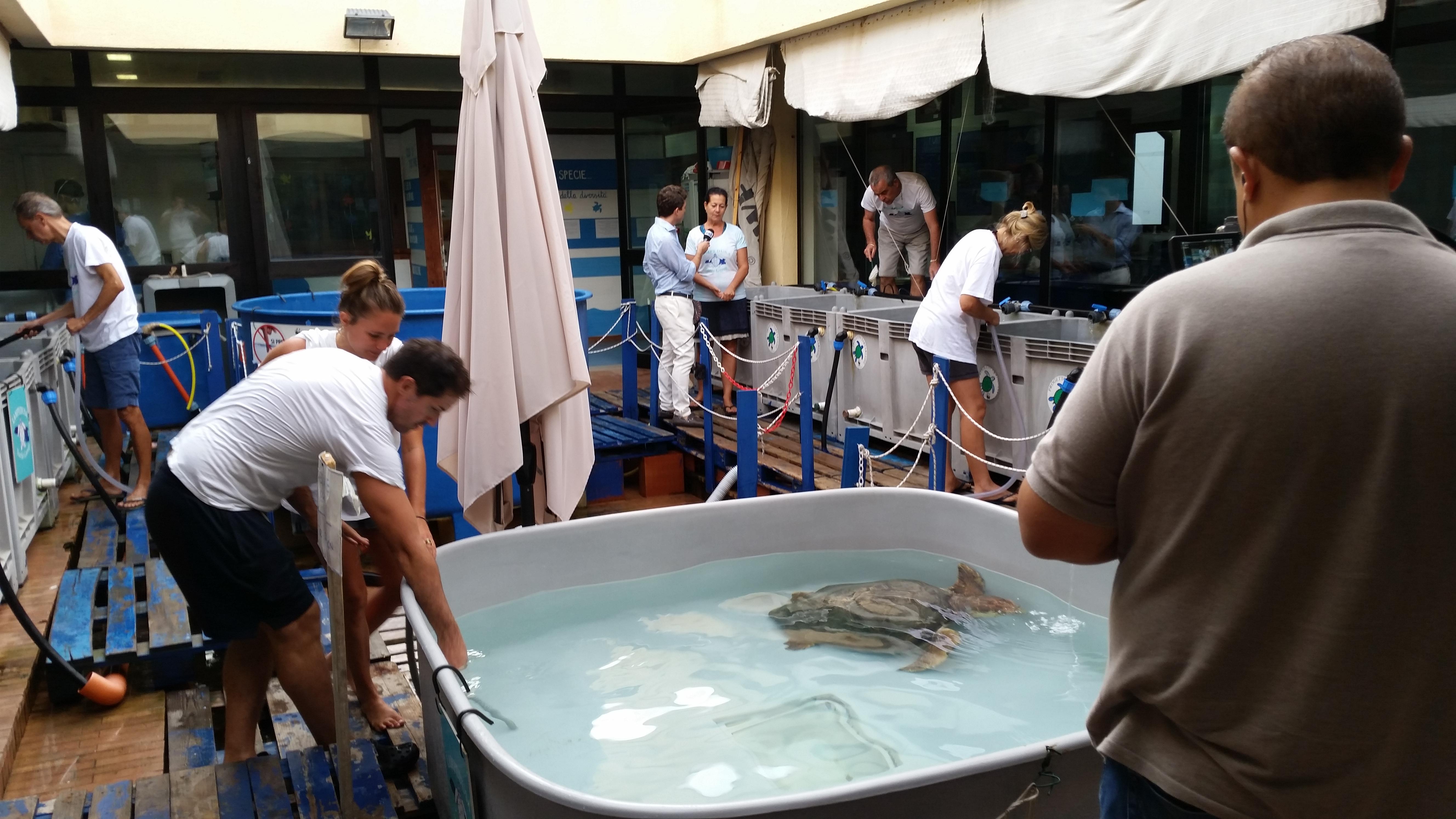 la clinica per tartarughe marine a lampedusa sito
